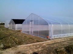 农用膜大棚膜